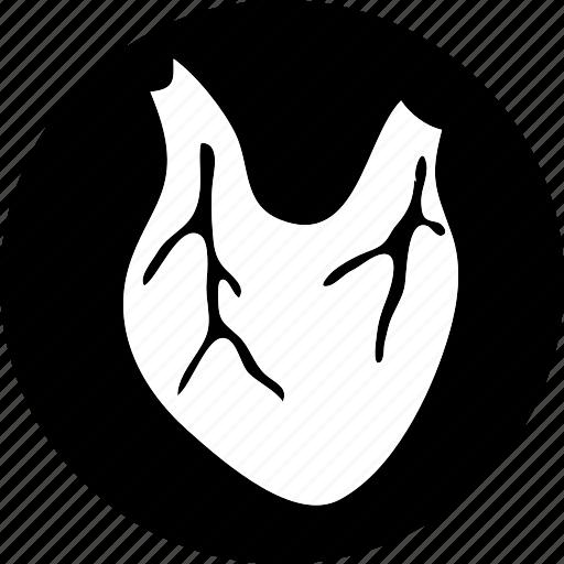anatomy, body, human, medical, part icon