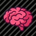 anatomy, body, brain, medical, organ
