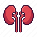 anatomy, body, kidneys, medical, organ