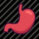 anatomy, body, medical, organ, stomach