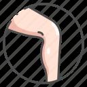 anatomy, body, female, human, leg, medical, organ icon