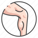 anatomy, body, human, leg, male, muscle, organ icon