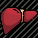 anatomy, body, liver, organ, organ0a, parts
