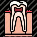 dental, dentist, molar, premolar, teeth, tooth icon