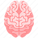anterior, body, brain, healthcare, human, organ, part icon