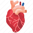 cardio, cardiology, cardiovascular, heart, hospital, organ icon