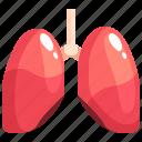 lung, anatomy, breath, lungs, breathe, organ icon