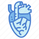 heart, human, medical, organ icon