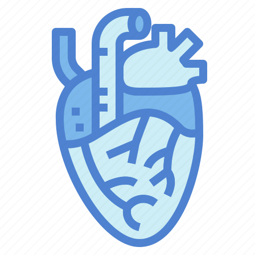 Heart, human, medical, organ icon - Download on Iconfinder
