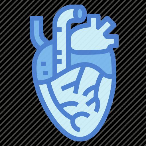 heart, human, medical, organ icon