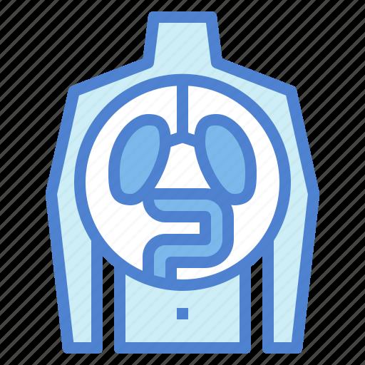human, medical, organ, physiology icon