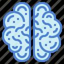 brain, human, medical, people