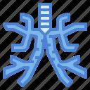 bronchus, diagram, human, medical icon