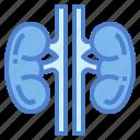 kidneys, medical, organ, urology icon