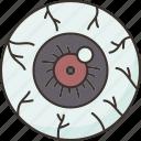 eyeball, cornea, optic, nerve, ophthalmologist