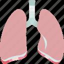 lungs, trachea, pulmonary, respiratory, breathing
