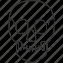 skull, human, head, death, skeleton