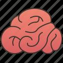brain, cerebellum, intelligence, mind, neuron