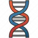 chromosome, dna, genetic, helix, molecular icon