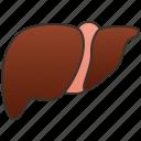 anatomy, cirrhosis, gallbladder, hepatic, livers