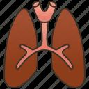 breathe, lungs, pulmonary, respiratory, trachea
