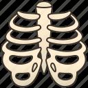 orthopedic, ribs, skeleton, thorax, tones