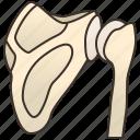bones, clavicle, joint, shoulder, skeleton