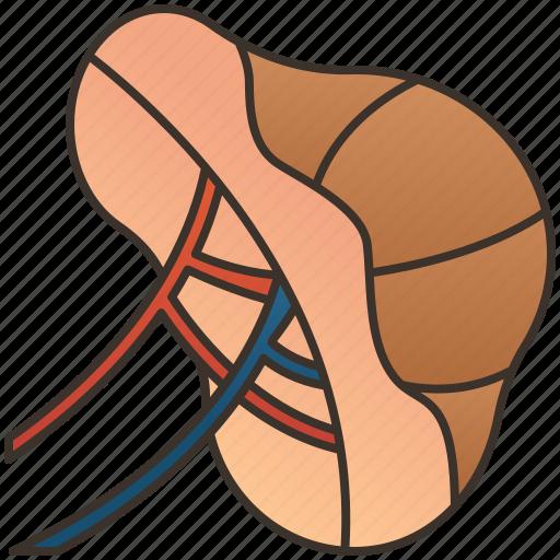 Artery, blood, internal, organ, spleen icon - Download on Iconfinder