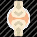 bones, cartilage, joints, ligament, orthopedic icon