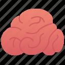brain, cerebellum, intelligence, mind, neuron icon