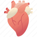 heart, cardiac, aorta, blood, human
