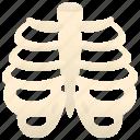 orthopedic, ribs, skeleton, thorax, tones icon
