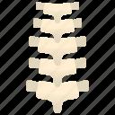anatomy, backbone, orthopedic, skeleton, spine icon
