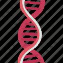 dna, helix, nucleotides, genetic, molecular