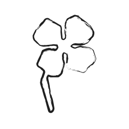 flower, photo, photography, rose, startup icon