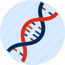 genetic, science, dna spiral, constructed, laboratory