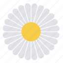 daisy, flower, nature, plant, floral icon