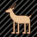 antilope, animal, deer, zoo