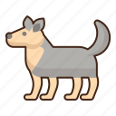 arctic, dog, animal, pet