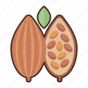 cacao, plant, tree, seed