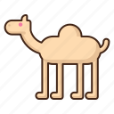 camel, animal, desert