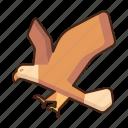 eagle, animal, bird, nature