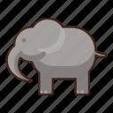 elephant, animal, wild, zoo