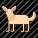 fennec, fox, animal