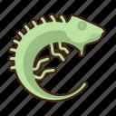 iguana, lizard, animal