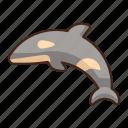 killer, whale, animal, sea
