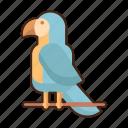 macaw, parrot, bird