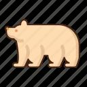 polar, bear, animal, wild
