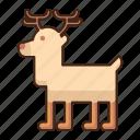 reindeer, deer, animal