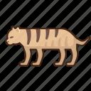 tiger, animal, wild, africa
